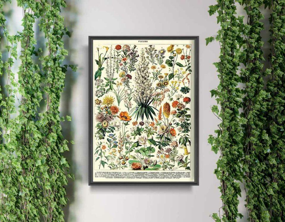 Plakat botaniczny na ścianie